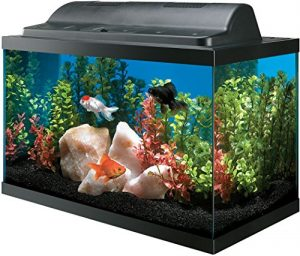 All Glass Aquarium AAG09009 Tank and Eco Hood Combo, 10-Gallon by Allen's Bookshop