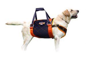 Whiz–Multi Purpose Thérapie physique Harnais pour chien Grande