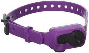 Dogtra iQ No Bark Collar Purple – IQ-BARK-PUR