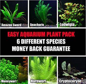 Facile Live Plantes d'aquarium Package–Différents–Anacharis, Amazon et Bien Plus Encore, 75+ Gallon Aquariums