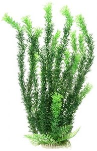 AquaTop Aquatic Supplies-cabomba- Green 40,6 cm