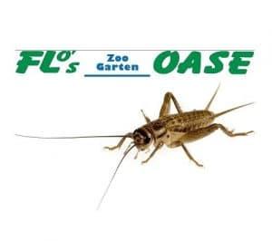 heimchen subadult dans boîte env. 50–60Pièces Doublure Doublure insectes Animaux