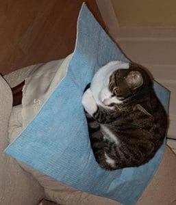 Lit de hamac de chat – doux chaud et confortable Pet Hamac Utilisation avec chaise pour chaton, furet, chiot ou petit animal de compagnie