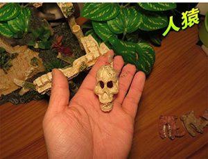 4ALice&Pet cachettes Habitat Lézard Serpent Araignée Repaire Les Reptiles échappent aux boîtes de Reproduction des araignées et aux crânes Humains