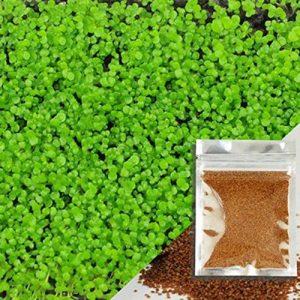 Aquarium Graines Eau Herbe Mini Feuille Vivre Plante Poisson Decoration Paysage
