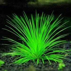 Homeofing 1000pcs mixtes Graines d'herbe Aquarium Décor Vert d'eau Plante aquatique de graines