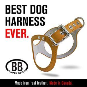 Buddy Belts Classic sans Crystals