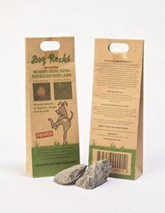 Dog Rocks urine Patch anti-retour