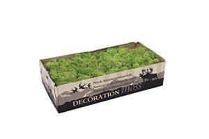 Mousse végétale stabilisée, lichen naturel stabilisé / Vert Olive, 500g