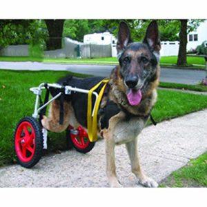AMYAL Fauteuil Roulant pour Chien, Chien Fauteuil Roulant à Grand Chien réglable en Acier Rehabilitation Hind Jambe Inoxydable for Chien Personnes handicapées (22-45 kg)