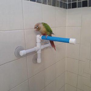 Portable Ventouse Douche support de perchoir pour oiseau Perroquet perruche perruche Amazones Calopsittes inséparables Aras africain Gris cacatoès de bain Perche au