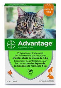 Advantage petit chat 4 pipettes
