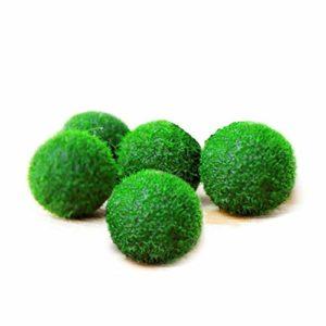 Aquarium Plants MARIMO Moss Boule X 5+ 1Gratuit clavardage Rare Facile Décor Usine. Vous vivez Moss Balle. (Ship from UK) Taille d»Environ 12mm