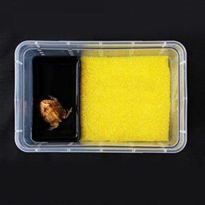 Greenlans rectangle pour animal domestique Reptile araignée Grenouille Home Eau Portable Abreuvoir Feeder