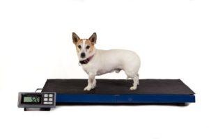 LCVS180K — 180kg x 0,05kg balance vétérinaire légere avec fonction «Hold» et plateforme grande – Tapis en caoutchouc inclus. LCVS-180K – 180 KG x 0,05 KG