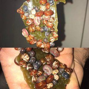 Plaques d'algues NH – Nourriture de week-end et d'élevage pour crevettes, escargots et poissons-chats – 4 x 7 cm