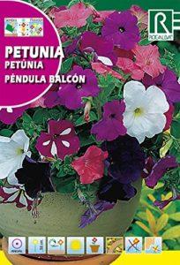 ROCALBA Semence Petunia p. Balcon 10ud