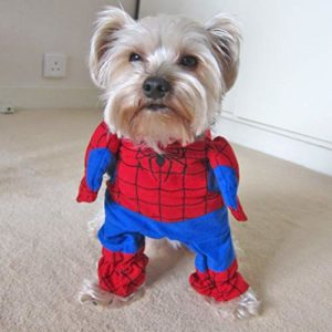 Alfie pour Animal Domestique par Petoga Couture–Costume de Super héros Spiderman–Taille: L
