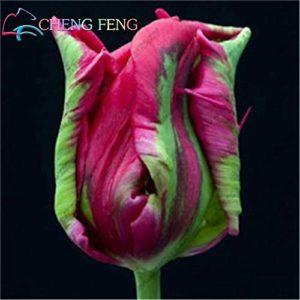 Elitely Lot de 10 sachets de graines de tulipes rares pour fleurs et glaces Rouge