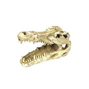 Reptile Décoration Aménagement Paysager DIY Crâne Crocodile Résine
