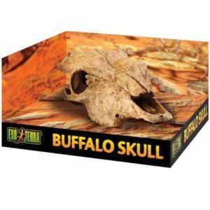 Exoterra Décoration Buffalo Skull pour Reptiles et Amphibiens 11x23x23 cm