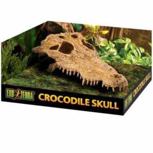 Exoterra Décoration Crocodile Skull pour Reptiles et Amphibiens 11x21x22 cm