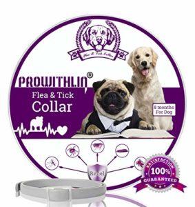 prowithlin Collier antiparasitaire pour Chiens, Collier Anti-puces et Anti-tiques Ajustable et imperméable, 8 Mois Protection en Sécurité ingrédients Control (1 Pack)